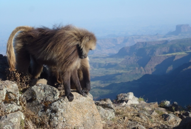 Simien Mountains - Day 2 (5)