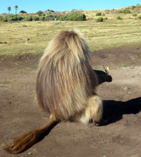 Simien Mountains - Day 3 (24)