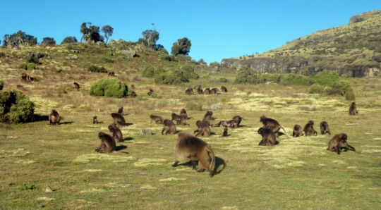 Simien Mountains - Day 3 (32)