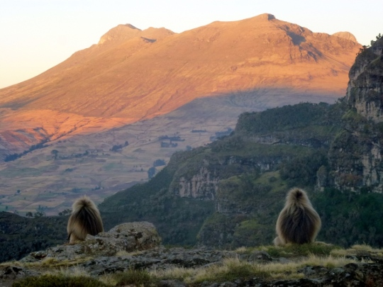 Simien Mountains - Day 3 (34)