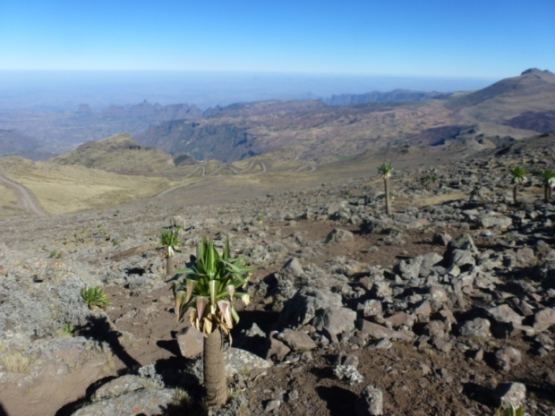 Simien Mountains - Day 4 (11)