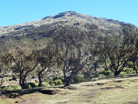 Simien Mountains - Day 4 (16)