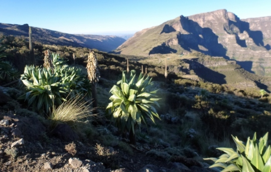Simien Mountains - Day 4 (4)