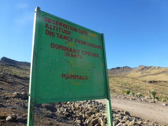 Simien Mountains - Day 4 (9)