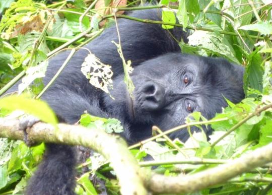 Top 3 Animals - Bwindi
