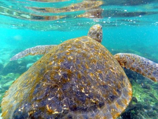 Top 3 Animals - Galapagos (2)