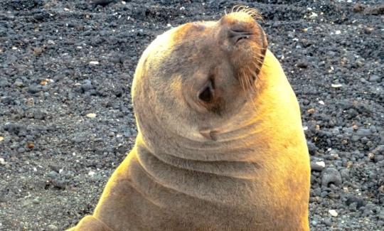 Top 3 Animals - Galapagos (3)