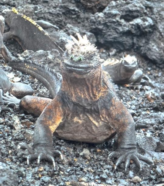 Top 3 Animals - Galapagos