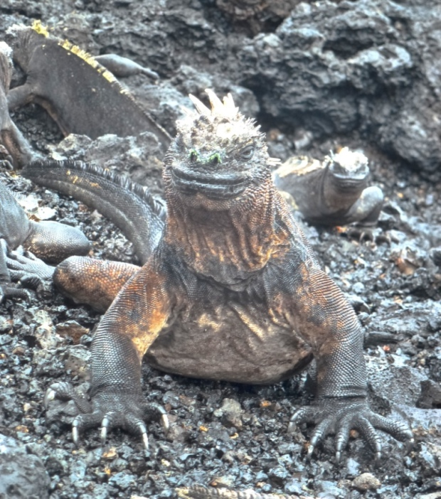 Top 3 Animals - Galapagos