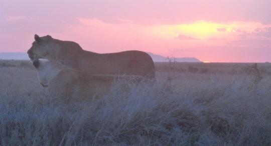 Top 3 Animals - Serengeti (2)