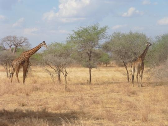 Top 3 Animals - Serengeti (3)