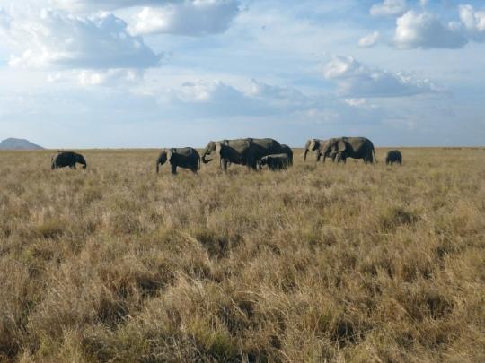 Top 3 Animals - Serengeti